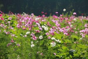flower-garden-1486941_1280